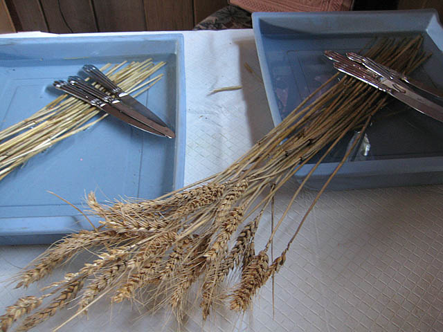 Brighid's Cross soaking straw