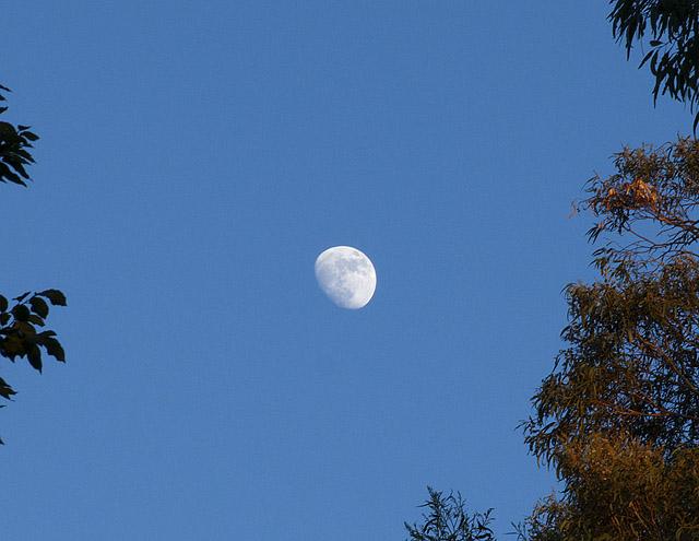 Gibbous Moon in June