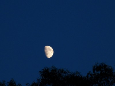Gibbous August Moon
