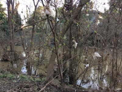 Coyote Creek Flood_Debris
