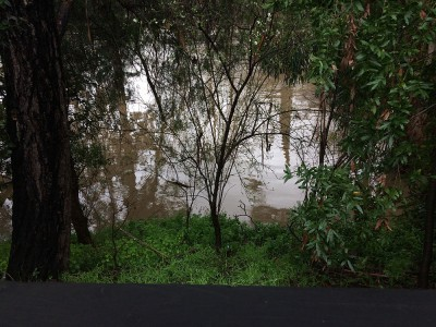 Coyote Creek Flood_From the Upper Yard