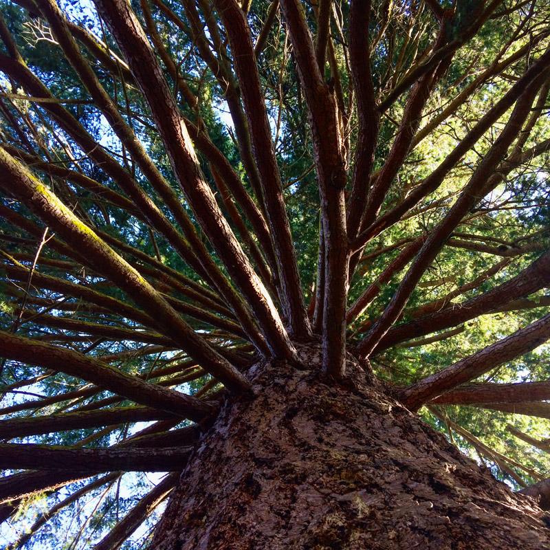 Gaian Retreat_Tree as Wheel