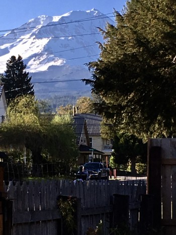 Shasta Mountain from front yard